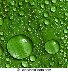 Green leaf with drops of water - Dew on green leaf with...