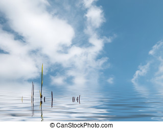 Water reeds - Water reed plant in water against blue cloudy...