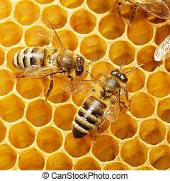 abejas, honeycells