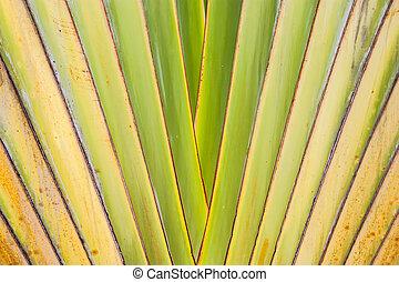 banana leaves cascaded like a blow texture