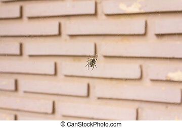 Spider hanging on a web against brick wall