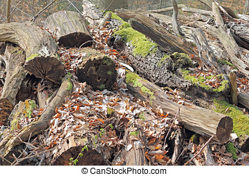 Stack of rotten wood - A Stack with rotten wood in a forest....