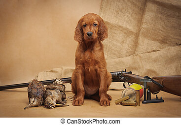 Puppy and hunting accessories, horizontal, studio