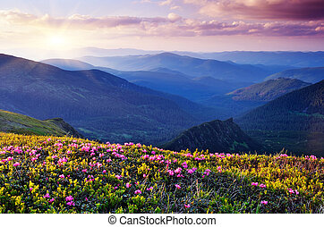Flowers in the mountains - Summer landscape with flowers of...