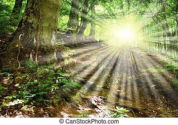 The mountain road - Sun beams and mountain road which was...