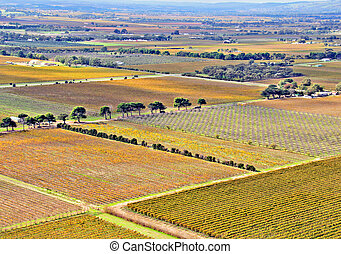 Aerial view of Agricultural Grape Vines and Orchards in...
