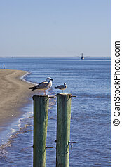Two Gulls on Poles Shrimp Boat in Background - Seagulls on...