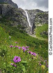 Flowers and waterfall - Beautiful flowers stachys macrantha...