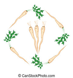Fresh Green Parsley Roots on White Background - Vegetable...
