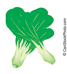 Fresh Green Baby Pakchoi on White Background - Vegetable, An...
