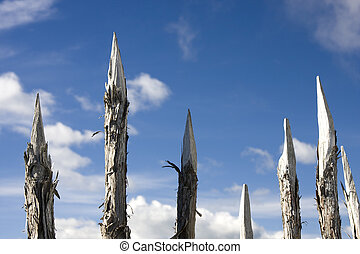 Sharp Wooden Spikes - Dangerous Sharp Wooden Spikes for...