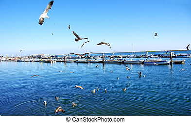 Seagulls flying in the sky over the harbor of Olhao