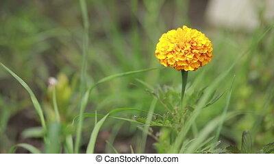 Flower. Macro