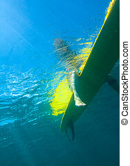 Surfer Girl.Underwater Viewing. - Surfer Girl Sitting on the...