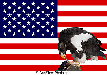 eagle in front of the american flag
