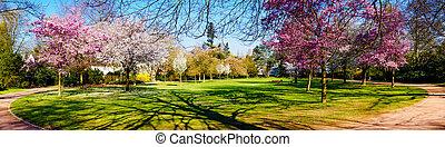 Panoramic view of a park  - Panoramic view of a park