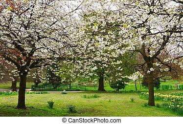 imagem, primavera