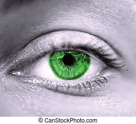 Green female eye macro. Vector