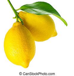 Lemon isolated on White. Fresh and Ripe Lemons