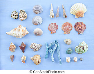 Variety of sea shells and nail shells on blue wooden...