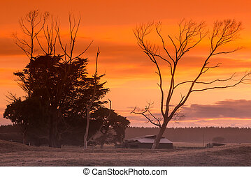Morning Farm Trees - Warm morning sky over a farm shed and...