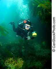 Female Scuba Diver swimming through the Kelp in Catalina -...