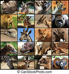 animals collage - Collage with different animal faces.