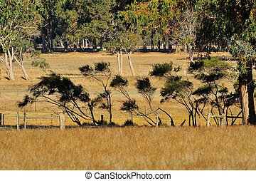 Scruffy Shrubs - line of small spindly shrubs on fence line...
