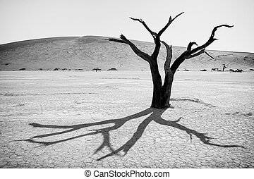Dead Tree - Dead tree with backlighting and high contrast,...
