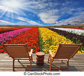 Very beautiful bright multi-colored flower fields Commercial...