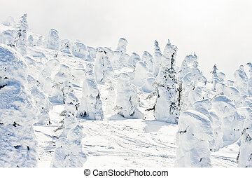 Ski Resort Terrain in Winter