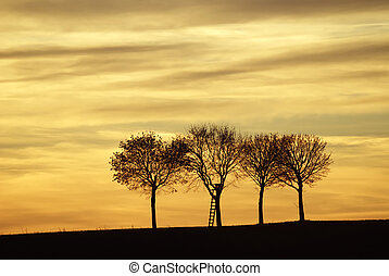 Three lonely trees