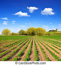 freshly sown sunflower field - Spring landscape with freshly...