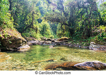 Jungle and River - River running through the jungle in the...