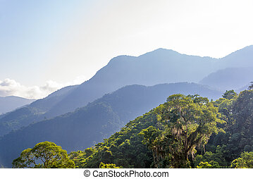 Jungle and Hills - View of a jungle with hills in the...