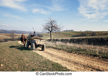 Horse with a cart, landscape, Romanian Banat
