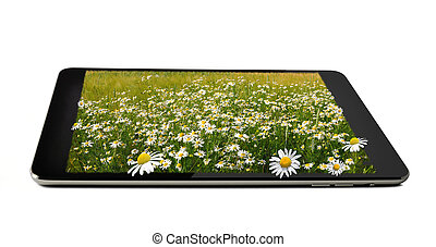 tablet with field of marguerites on it isolated on white