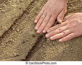 Sementes, fita, semear