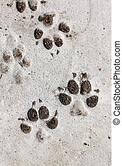 footprints of dog - footprints of dog on the cement floor