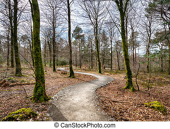 Woodland Path - Path leading through woodland at Hart Woods...