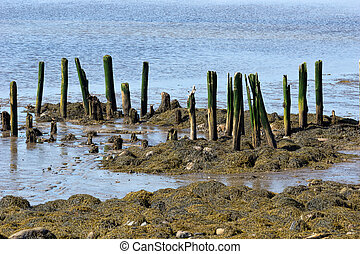 Remains of pier at Stockton Springs Maine - The remains of...
