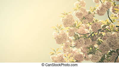 Vintage flowers - Vintage sakura Antique style photo of tree...