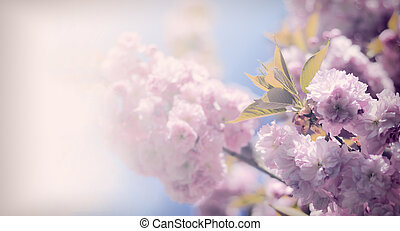 Vintage flowers - Vintage sakura. Antique style photo of...