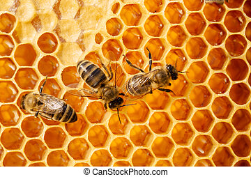 Macro of working bee on honeycells - Close up view of the...