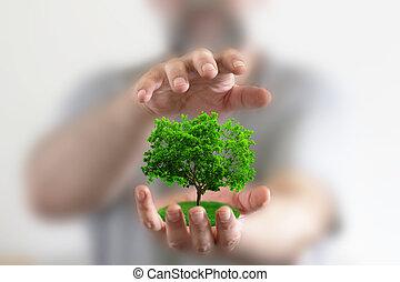 pequeno, árvore, segurando, mãos