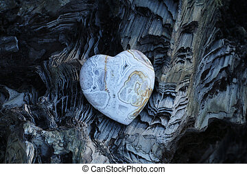 heart  - A heart of gem on a fossil wood