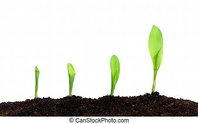 Crecer, plantas