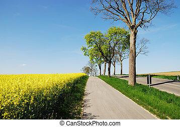 Country road along a yellow rape field