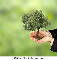 Olive tree in palms as a gift