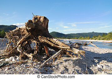 Driftwood at the river Isar in Germany.